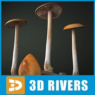 Grisette_mushroom_Logo_B.jpg