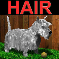 scottish terrier 3d model