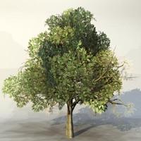 Tree_052.zip