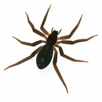 3ds max amaurobius spider