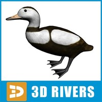 Labrador duck by 3DRivers