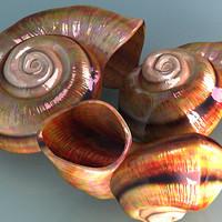 3d model spiral shells