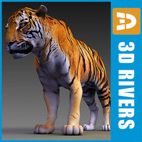 Amur tiger by 3DRivers