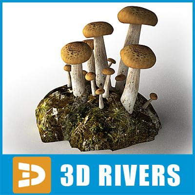 Beech-Mushroom_Logo_B.jpg