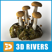 Beech Mushroom by 3DRivers