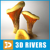 Chanterelle by 3DRivers