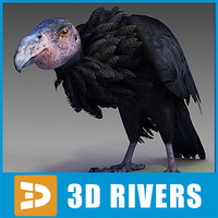 California condor by 3DRivers
