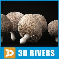 3d model gem-studded puffball mushrooms