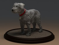 miniature schnauzer 3d model