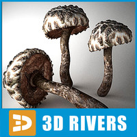 3d strobilomyces floccopus mushrooms
