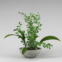 plant_0007