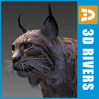 endangered animals iberian lynx 3d model