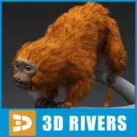 Golden lion tamarin by 3DRivers
