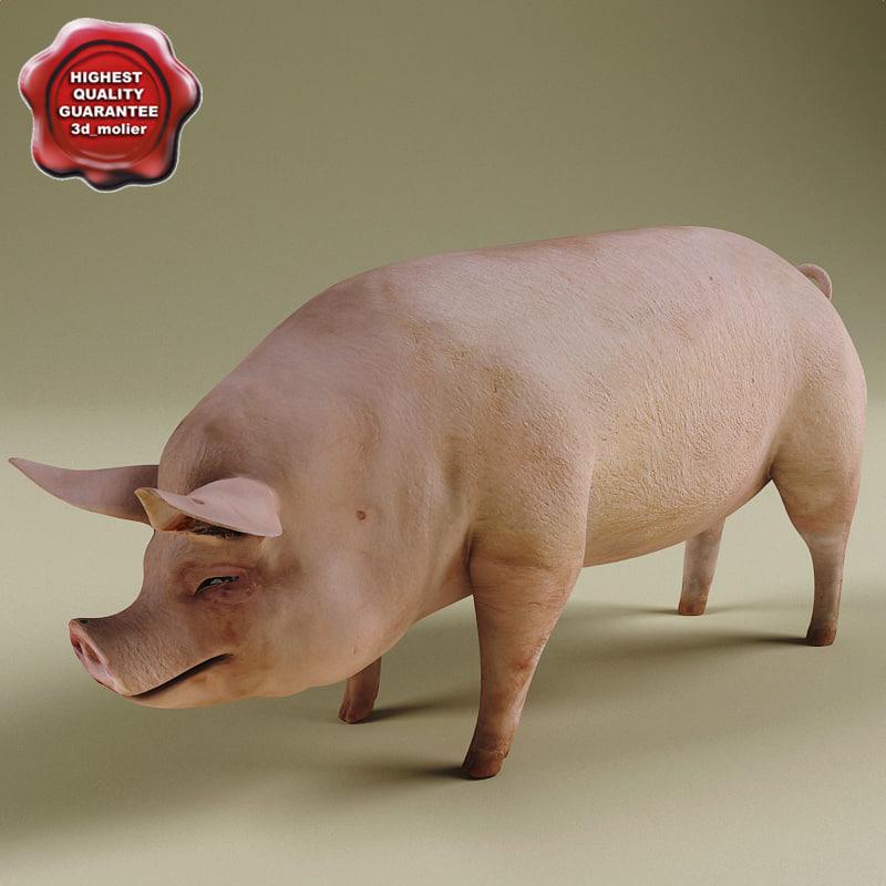 Pig_0.jpg
