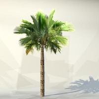 palm_016.zip