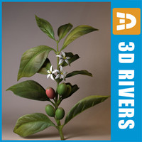 Coffee plant by 3DRivers