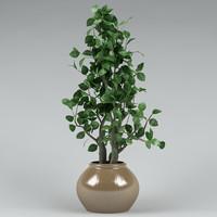 3d plant 3dsmax8 model
