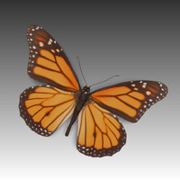 butterfly fly 3d obj