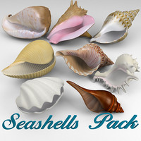 3d model seashell shell sea