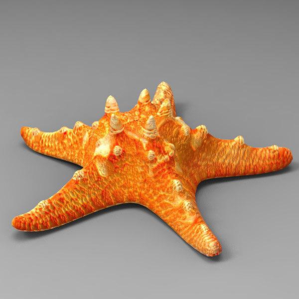 3d model starfish fish