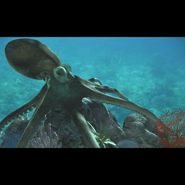 octopus01.jpg