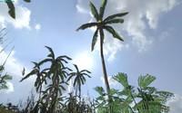 maya 3 palms