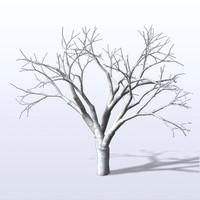 maya bare tree