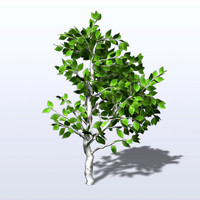 3d model of birch tree