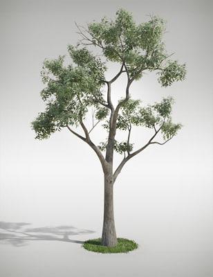 eucalyptus_bark_01.jpg