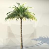 pc palm 3d model