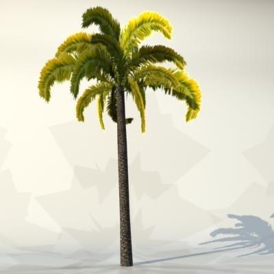 palm_021_1.jpg