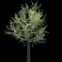 15 evergreen trees tropical 3d model
