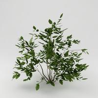 3ds max garden plant