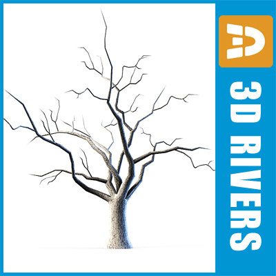 naked_tree_logo.jpg