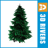 max norway spruce trees