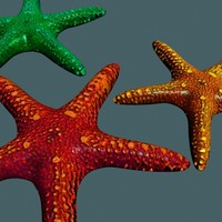 3dsmax starfish