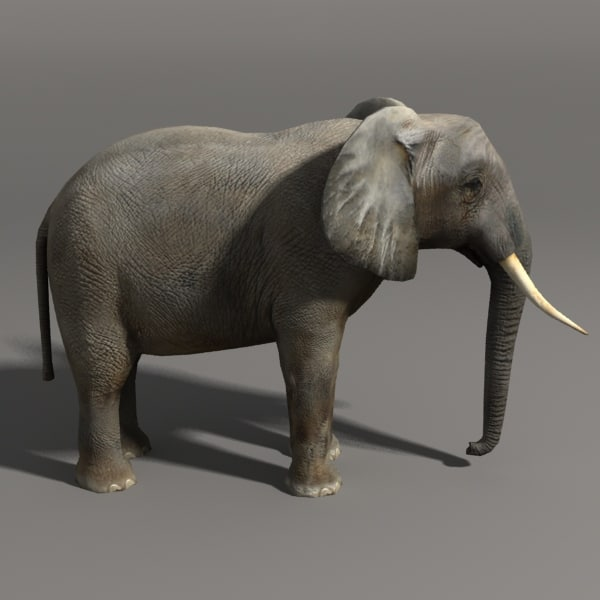 elephant 3d model - elephant... by ozgur saral