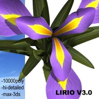 3d model realistic medium
