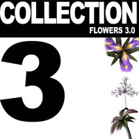 COLLECTION FLOWERS 3.0