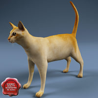 cat modelled 3d model
