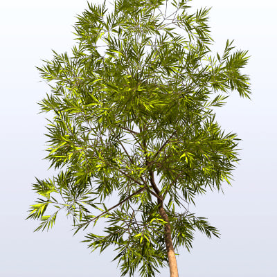 willow tree 3d model - Willow_2.mb... by johnsely
