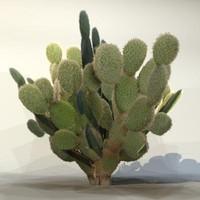 Desert_plant_07.zip