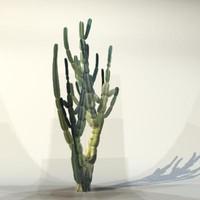 Desert_plant_05.zip