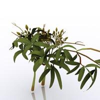 plant studio obj