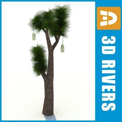 Yucca-filifera_logo.jpg