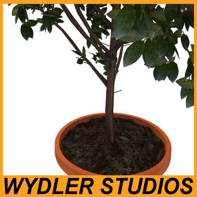 3d houseplant pottery - Houseplant2... by Wydler Studios