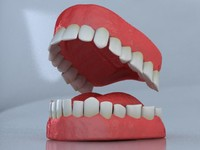 3d model set teeth