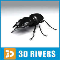 Ground beetle by 3DRivers