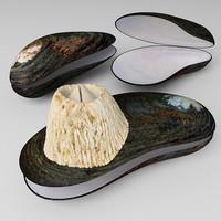 Mytilus seashell