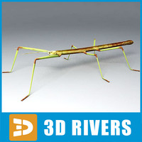 Stick insect by 3DRivers